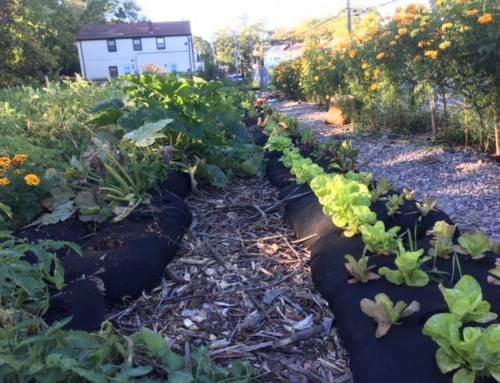 Ballou Urban Agriculture Site Wins $50,000 Grant for First Winter Grow Season